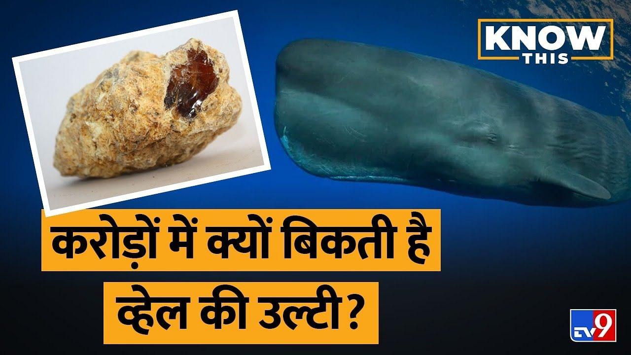 KNOW THIS: Sperm Whale की उल्टी में ऐसा क्या है जो इसकी कीमत करोड़ों में है?